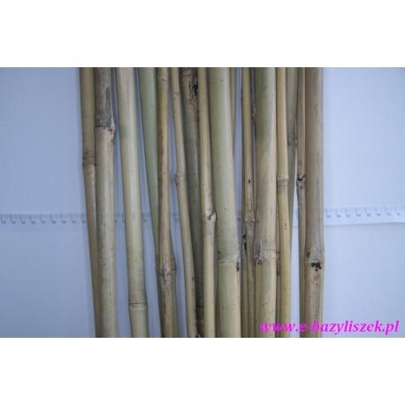 Bambusy cienkie, grube, długie, krótkie