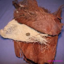Nasada liścia palmowego naturalna i wybielona