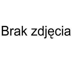 Poecilotheria regalis samiec Ptasznik